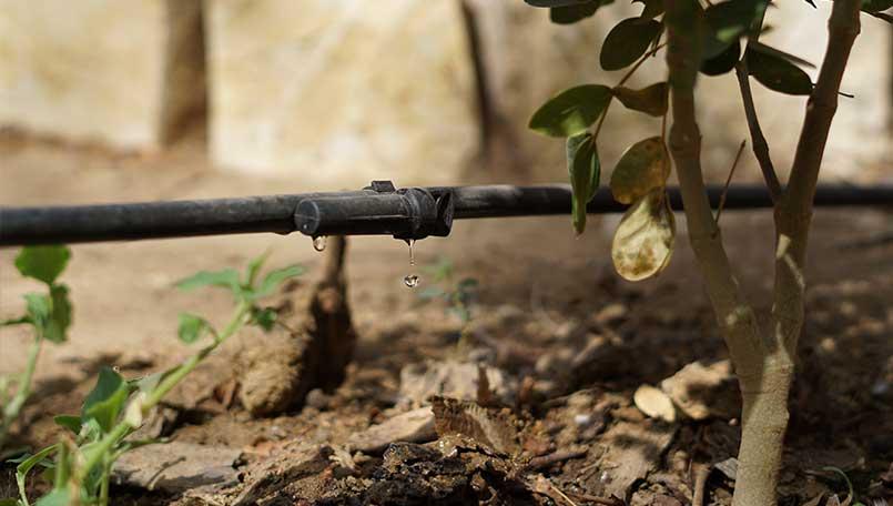Le système de goutte-à-goutte permet de réaliser d'importantes économies d'eau - Yoon Wi
